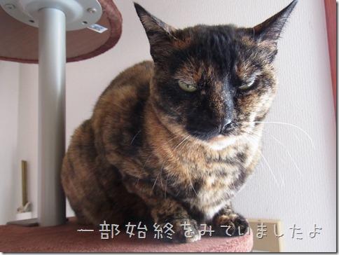 RIMG0013-5_thumb-ベッド発送★