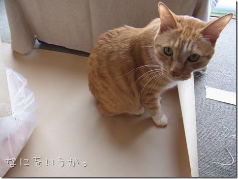 RIMG0030-4_thumb-ベッド発送★