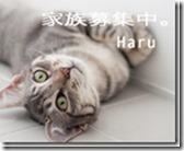 harubanner5-のどかなフタリ。