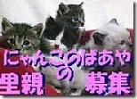 hoikuenbana_20081202000258-週末のご来店、ありがとうございました!/茶色のジャングル