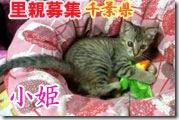 img1e673b68zikezj-猫の家6周年。