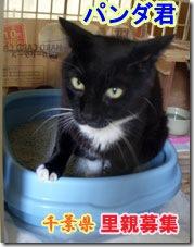 imgd8f524a2zik3zj-猫の家5周年記念企画はじまります。