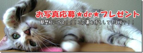 oshaside_thumb-猫の家製品使用写真大募集!!(抽選プレゼントあり。)