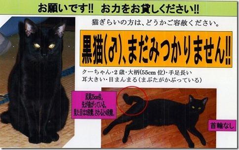 scan029_thumb-杉並で迷子猫さんを捜しています/入荷でした。